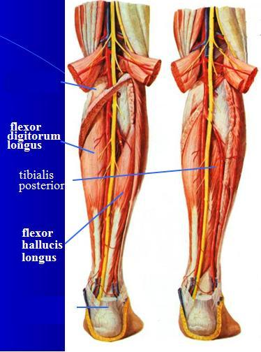 Medial Tibial Stress Syndrome Shin Splints Run Waterloo